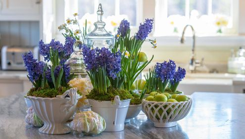 How To Decorate Your House Using Hyacinths