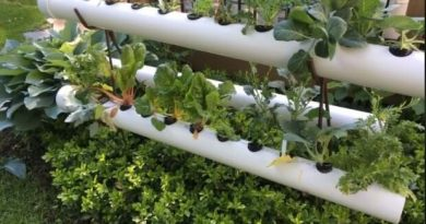 Get The New Ideas for Perfect Hydroponic Garden for Healthy Garden